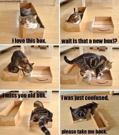 If you don't like Cats and Boxes Meme – LOOK AWAY NOW…